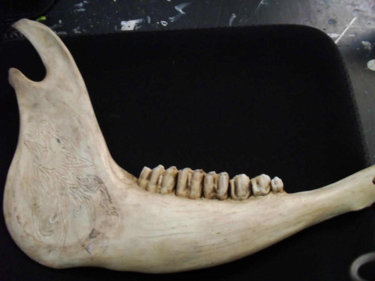 Otçul bir hayvan olan inek ve dişleri...