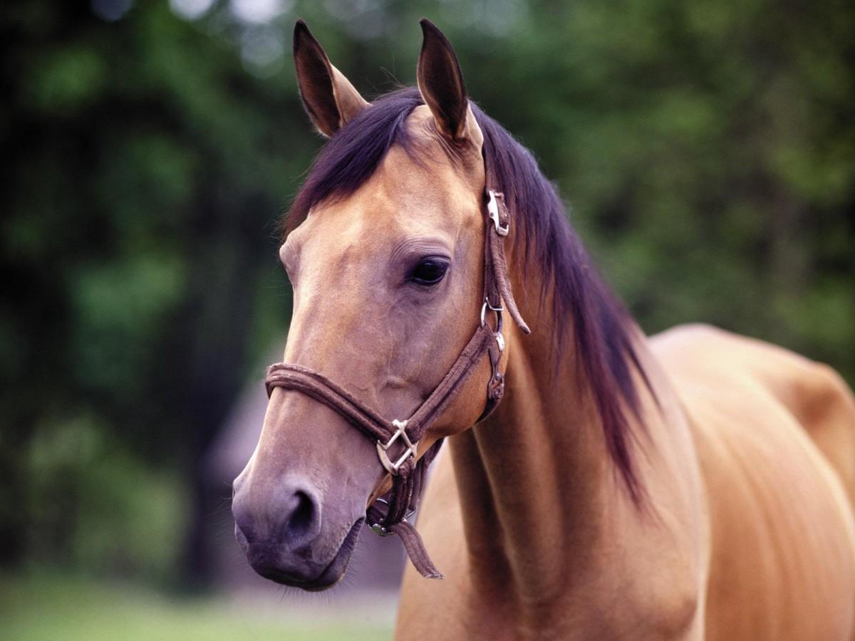 Otçul bir tür olmasına rağmen devasa bir çeneye sahip olan bir at...