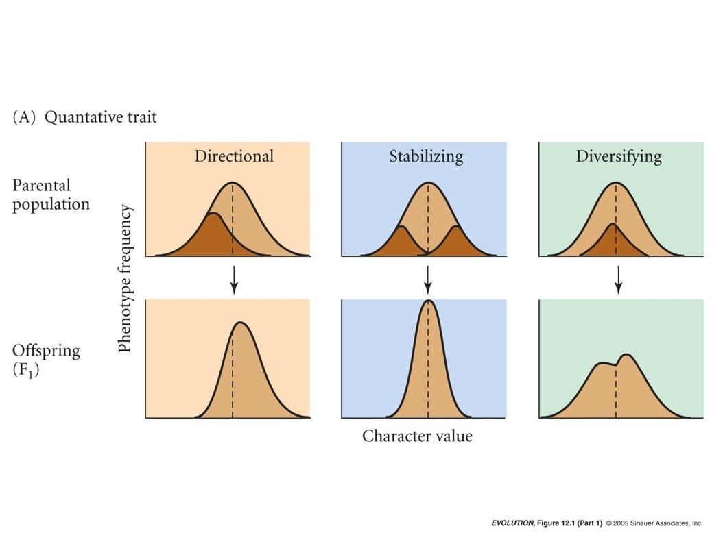 Seçilim etkisi altında sürekli çeşitlilik dağılımının değişimi...