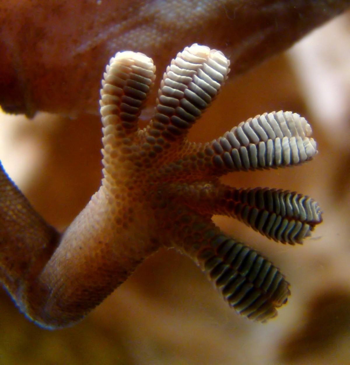 Gecko ayak yapısı...