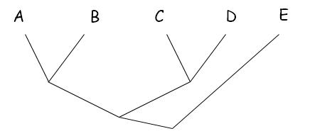 A, B, C, D ve E (dışgrup) türlerinin filogenisi...