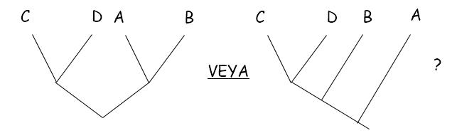 İki ayrı filogeni ihtimali bulunmaktadır. Hangisi doğrudur?