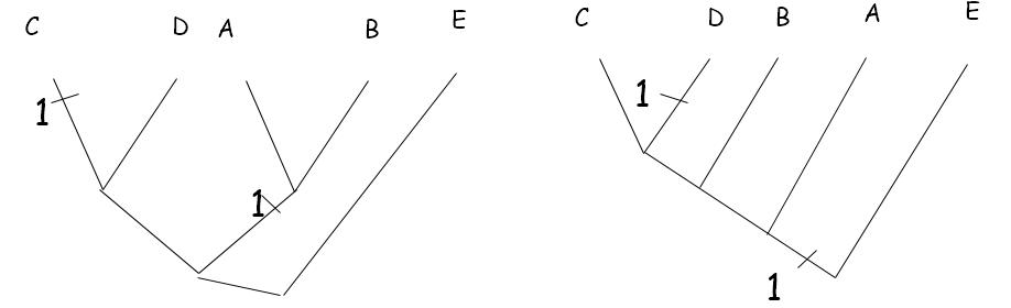 Maksimum parsimoniyi tespit edebilmek için tek tek özellikleri ağaçlara yerleştirmemiz gerekiyor.