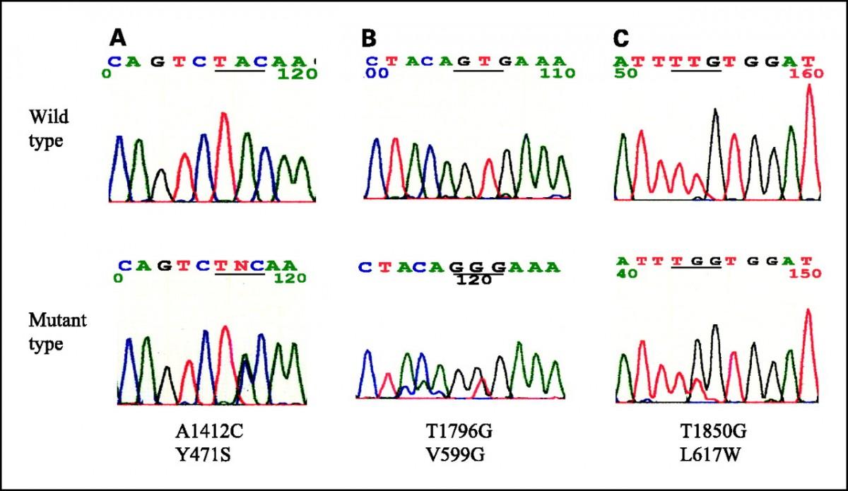 Mutasyonları tespit etmek için kullandığımız genetik dizileme yöntemlerinden örnek bir sonuç...