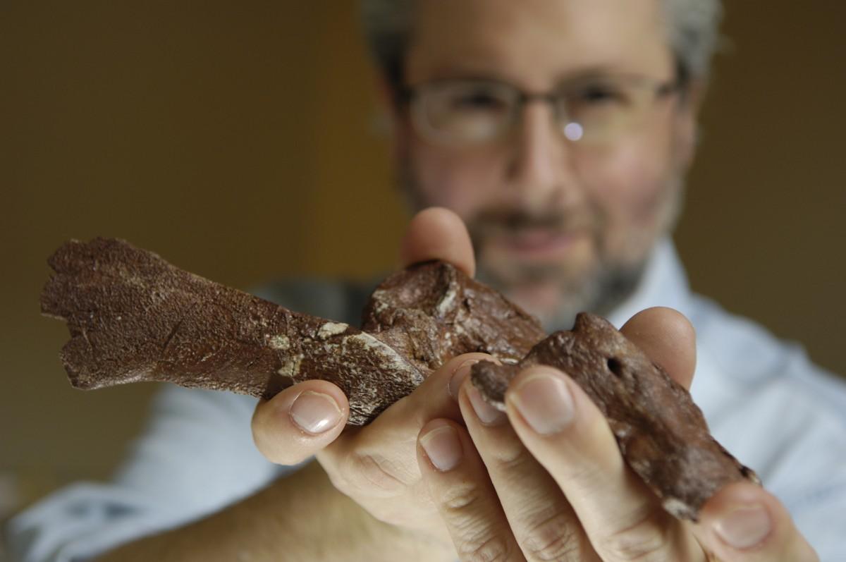 Chicago Üniversitesinden Neil Shubin son buluşunu sunuyor. Balık ve ilk ayaklı hayvanlar arasındaki geçiş türü olan 375 milyon yıllık Tiktaalik roseae'nın iyi korunmuş pelvis ve pelvik yüzgecinin bir kısmının keşfi, arka ayakların evriminin aslında gelişmiş arka yüzgeçler olarak başladığını açığa çıkardı. Bu buluş, büyük ve hareketli arka uzantıların omurgalıların karaya geçişinden sonra var olduğunu öne süren teori ile çelişmektedir. Fosiller, bilim insanları tarafından ocak 2013'de Proceedings of the National Academy of Sciences'da online olarak tanımlandı.