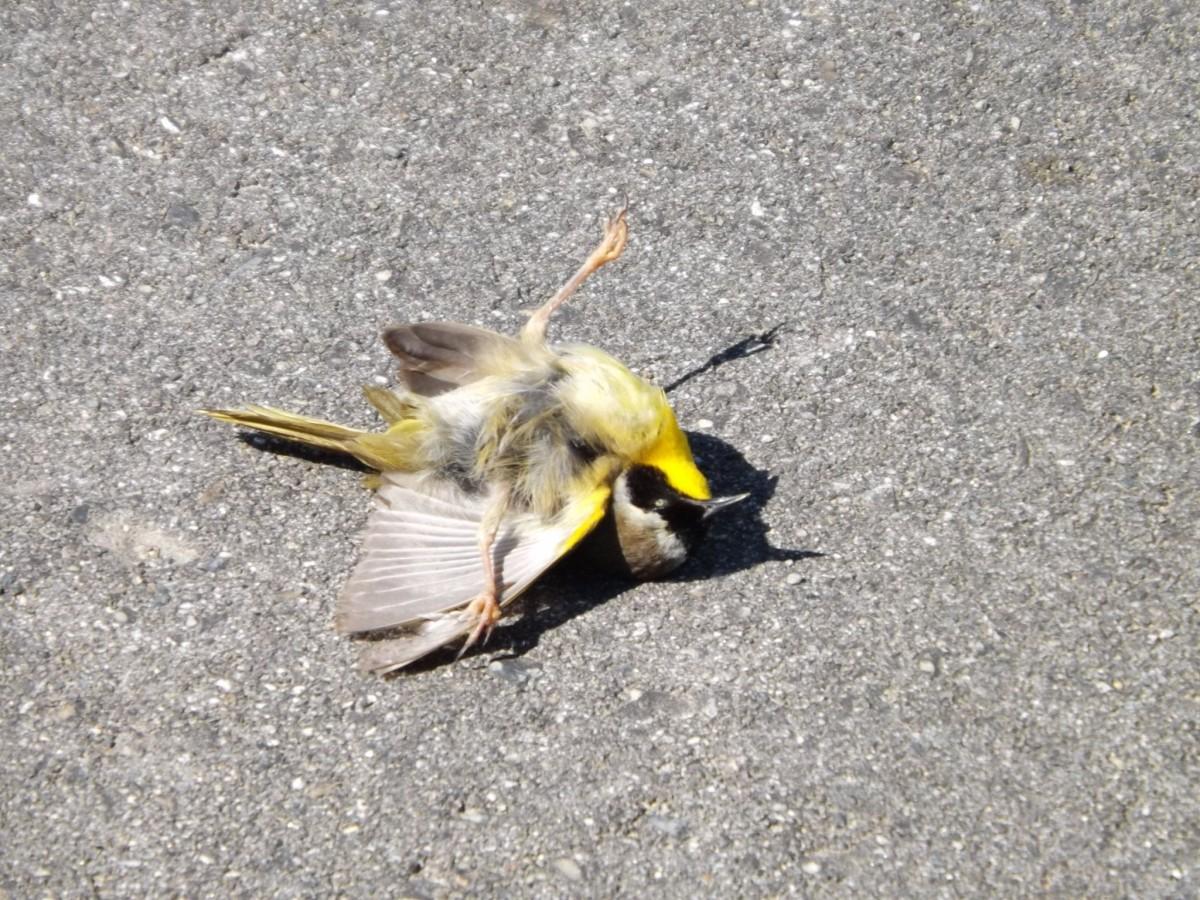 """Evrimsel açıdan """"başarısız"""" olmuş bir kuş..."""