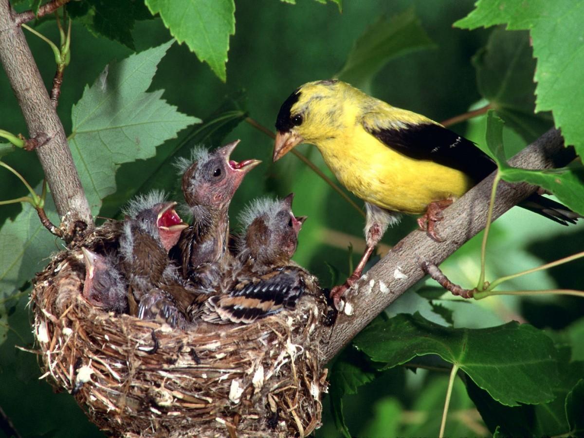 """Evrimsel açıdan (şimdilik) """"başarılı"""" bir kuş ve yavruları..."""