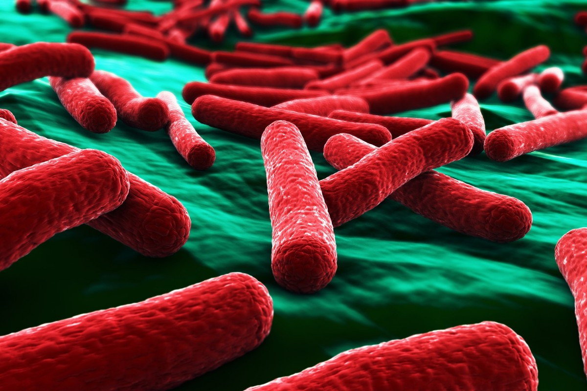 E. coli bakterileri...