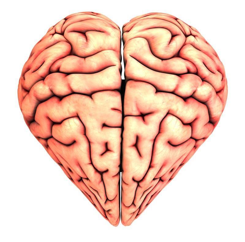 Beynin bölümleri: her birinin uzmanlaşması