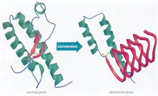 Prionlar