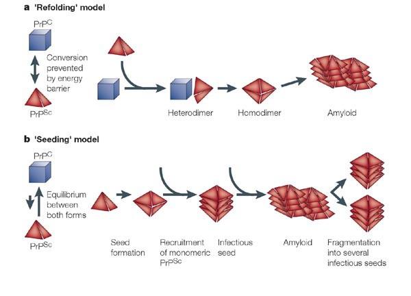 Prionlarda çoğalma <span class=