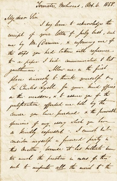 Wallace'tan gelen mektup...