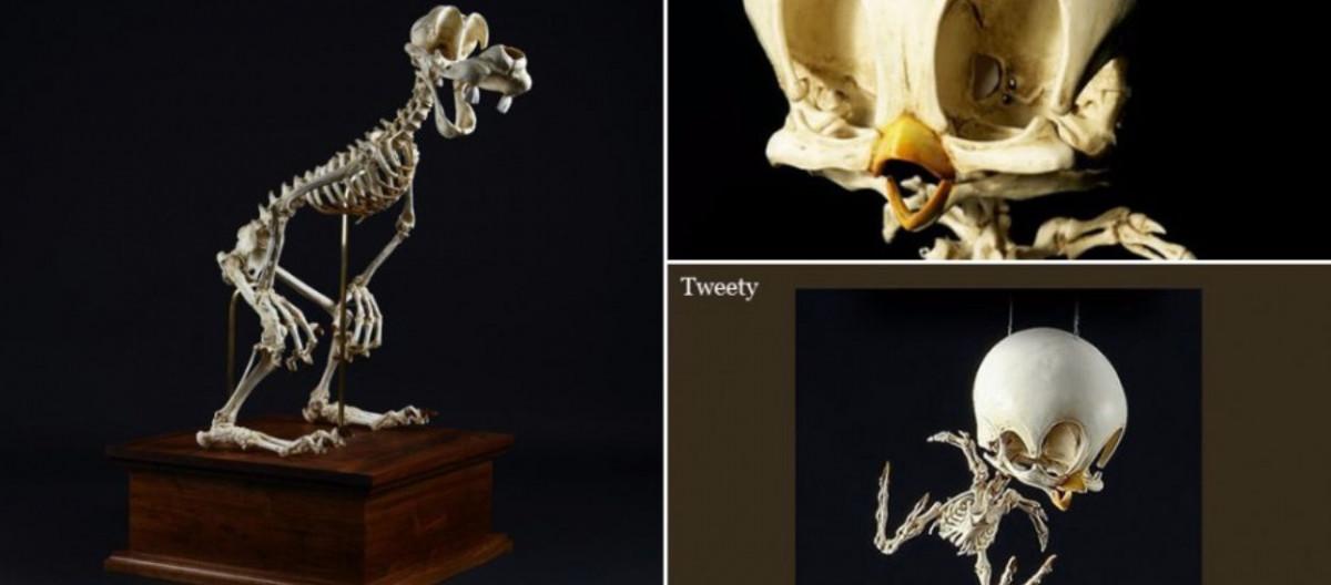 Meşhur çizgi Film Karakterlerinin Olası Iskeletleri Evrim Ağacı