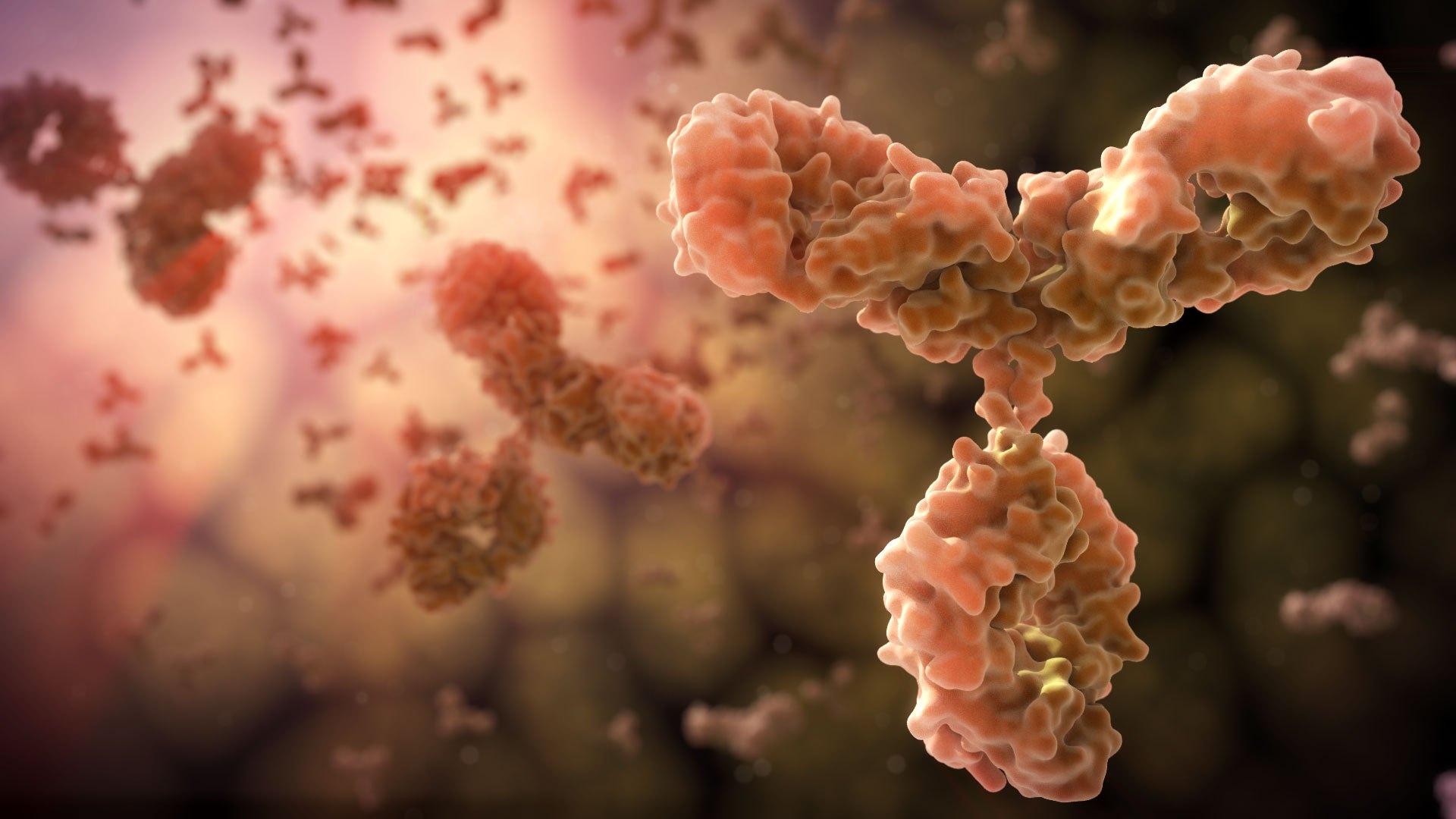 Virüslerin reseptörlerine tutunarak onları etkisizleştirebilen ve B lenfositlerden salgılanan gerçekçi antikor illüstrasyonu.