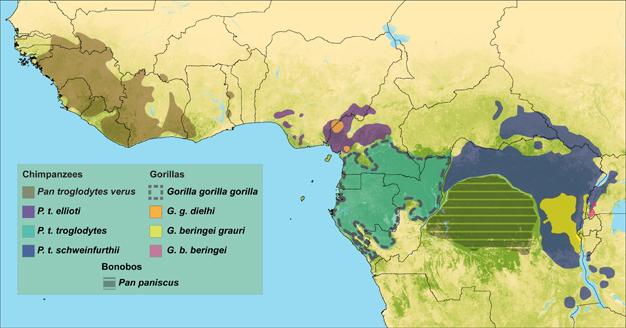 Görsel 3. Goril ve şempanze alt türlerinin dağılımları