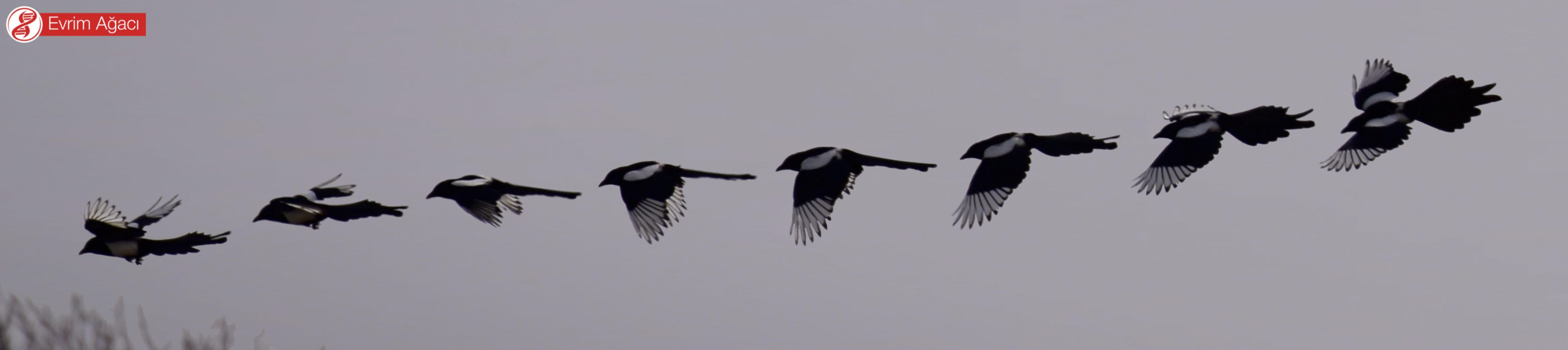 Uçarken çektiğimiz 10 saniyelik bir video kaydından birleştirdiğimiz 8 kare.