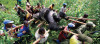Kongo'daki Goril: 1 Fotoğraf, Gidişatı Değiştirebilir!