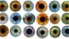 İnsan Göz Renklerinin Evrimi