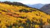 Vaka İncelemesi: Görkemli, Altın Yapraklı, Dev Titrek Kavak
