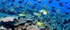 Okyanuslar ve Yaşam Alanları