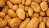 Kanser ile İlişkilendirilen Akrilamid Oranları Düşük, Genetiği Değiştirilmiş Patateslerin Satışı Onaylandı!