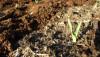 Ay'a Giden Çin'in Chang'e 4 Aracında Filizlenen İlk Bitkiler!