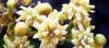 Çiçeklerin Kökeni Üzerine...