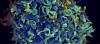 HIV'e Karşı Geliştirilen Bir Molekül, Virüsleri Savunmasız Kılıyor!