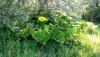 Bitkiler (Plantae)