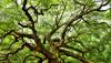 Helmont'un Ağacı: Hatalı Deneyler Bile Yeni Keşiflerin Önünü Açabilir!