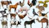 Evcilleştirme ve Ehlileştirme: Neden Bazı Hayvanlar Evcilleştirilirken, Bazı Diğerleri Evcilleştirilemez?