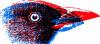 Darwin 2.0: Türleşme ve Çeşitlenmeyle İlgili Yeni Bulgular