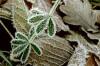 Neden Bu Kadar Farklı Şekillerde Yaprak Bulunur? Yapraklar Şekilleriyle Damarlar Arasındaki Evrimsel İlişki Nedir?