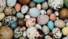 Kuş Yumurtaları Neden Farklı Renklerde Olacak Şekilde Evrimleşti?
