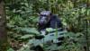 Primatların Bilişsel Yeteneği