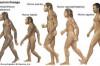 Bulunan Fosillerin Ayırt Edilmesi, Analizleri ve Sınıflandırılmaları Üzerine...