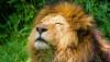 Vahşi Doğadaki Hayvanlar ile Hayvanat Bahçesi Hayvanları Arasındaki Farklar