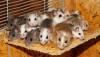 Epigenetiğin Gücü: Fareler Yavrularını ve Torunlarını Spermleriyle Uyarabiliyorlar!