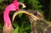 Birlikte-Evrimin Coğrafi Mozaikleri: Birbiriyle Uyumlu Olarak Evrimleşen Canlılar