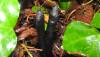 Ölü adam parmağı (Xylaria longipes)