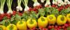 Organik Tarım, Endüstriyel Tarım Karşısında Dayanabilir Mi?