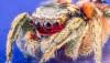 Örümceklerle İlgili 5 Mit ve 5 Gerçek