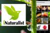 Ekosistemin Sosyal Platformu: iNaturalist