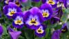 Çiçeklerin Kökeni Üzerine: Çiçekli Bitkiler Nasıl Evrimleşti?
