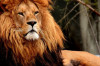 Bazı Hayvanlarda Neden Yele Bulunur? Yele Nasıl Evrimleşmiştir?