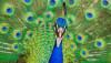 Erkek Kuşlar Hem İyi Şarkıcı Hem Güzel Görünüşlü Olamazlar!