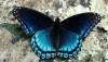 Evrimsel Seçilim Matematiğine Giriş: Kavramlar ve Analizler