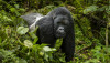 Primatlar (Primates)