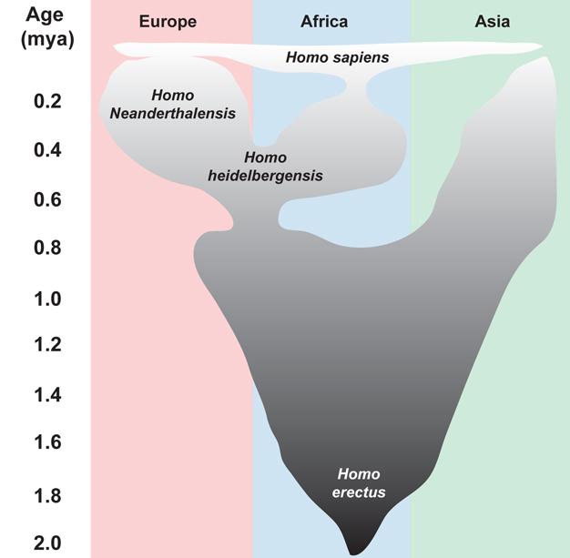 Görsel 4. Orta Pleistosen insan evriminin modeli. Homo heidelbergensis'ten Homo neanderthalensis'e kademeli geçişin Avrupa'da meydana geldiğini ileri süren kanıtlar vardır.                                                                                                                                                                                         Görsel, şu çalışmalardan uyarlanmıştır: Harvarti, K. 100 years of Homo heidelbergensis – life and times of a controversial taxon. Mitteilungen der Gesellschaft für Urgeschichte 16, 85-94 (2007) ve Hublin, J. J. The origin of Neandertals. Proceedings of the National Academy of Sciences (USA) 106, 16022-16027 (2009).