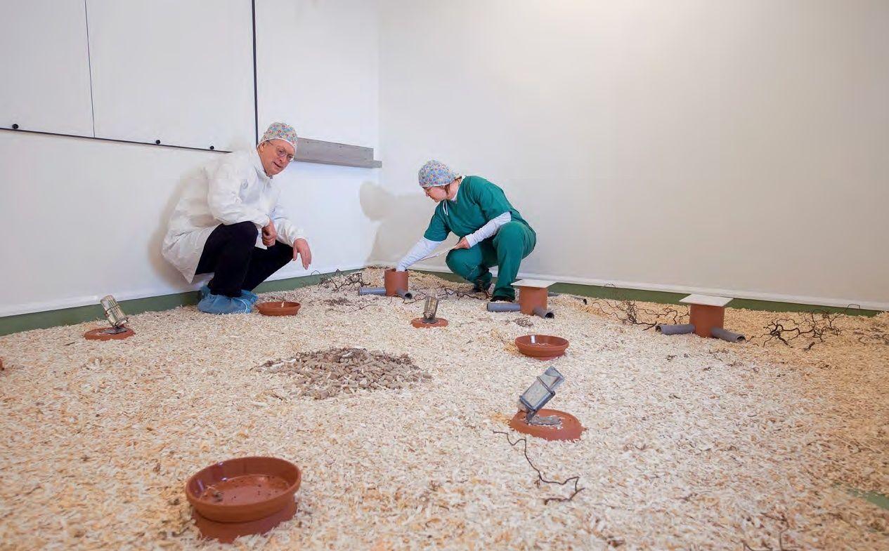"""Fotoğrafta, Diethard Tautz ve meslektaşı Christine Pfeifle tarafından ilgili deney çerçevesindeki tüm hazırlıklar tamamlanmıştır. Artık fareler bu andan itibaren aylarca rahatsız edilmeden burada kalacak ve sadece kameralar tarafından davranışları kaydedilecektir. Odalar, farelerin kazıp eşelemesi için odun yongasıyla kaplanmıştır, ayrıca buralara gıda ve su kapları konulmuştur. Giriş boruları ve kaldırılabilir kapakları olan kırmızı """"kulübeler"""" yuva olarak kullanılmaktadır. Her deneye göre fareler farklı donatılmış çevrelerde yaşamaktadır. Mesela, az döşenmiş bu deney odasında araştırmacılar, özellikle sosyal bir tür olan Mus spicilegus'un sosyal davranışlarını ve bölge oluşturmasını incelemektedir. Fareler odanın bir köşesine (arkada) yığdıkları yonganın altında beraberce yuvalarını yapmış ve tüm yiyecek stoklarını odanın ortasına taşımışlardır."""